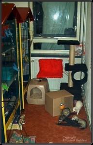 Zelfbouw frettenkooi Michelle, met frettenkamer